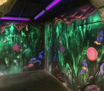 Entering A Cave of Bats